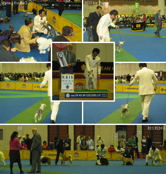 2nd Daegue KKC Dog Show (April, 4, 2004)