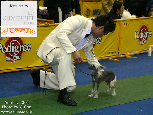 Cookie at 2nd Daegu KKC Dog Show