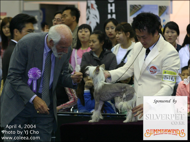 Fuzzy at 2nd Daegu KKC Dog Show